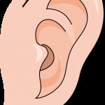 新生児 ダウン症の特徴は耳に出る