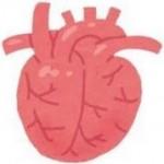 ダウン症の兆候はエコーで分かるの?心臓にまつわるポイント