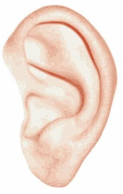ダウン症 耳 折れ