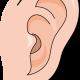 ダウン症の子は耳に特徴が出ます!エコー検査で確認はできるの?